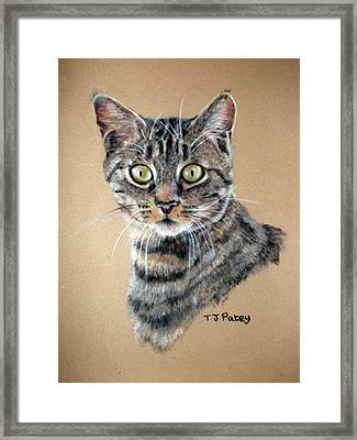 Shock Framed Print by Tanya Patey