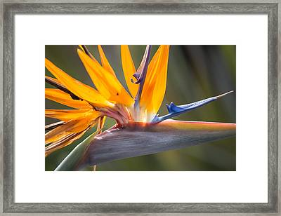 Framed Print featuring the photograph Shocktop by Julie Andel