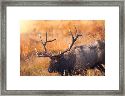 Shooting The Bull Framed Print by Darren White