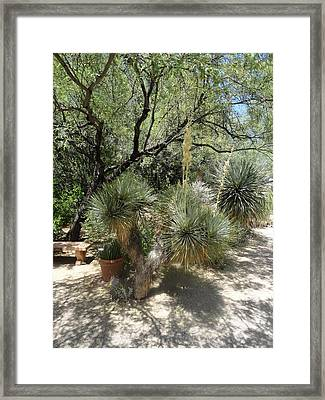 Shooting Up Cactus Garden Framed Print