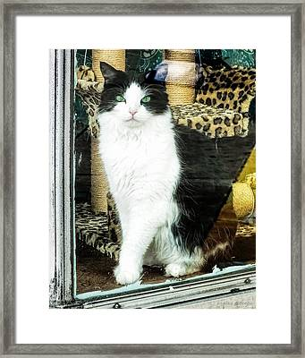 Shop Kitty Cat Downtown Store Window Display Framed Print