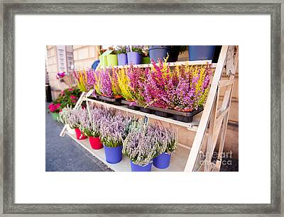 Shop Stillage With Blooming Heather Flowers  Framed Print by Arletta Cwalina