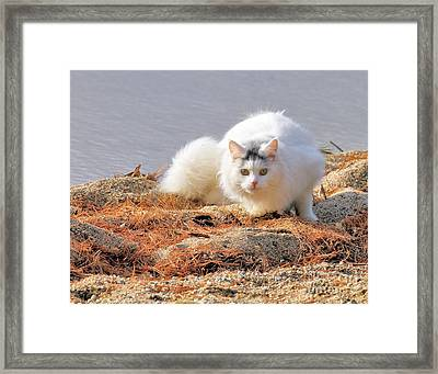 Shore Kitty Framed Print