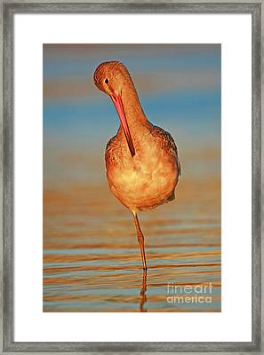 Shorebird Sunset  Framed Print