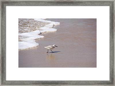 Shorebird Framed Print by Ty Nichols