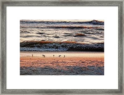 Framed Print featuring the photograph Shorebirds by Lars Lentz