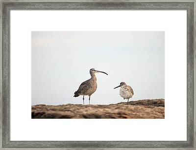 Framed Print featuring the photograph Shorebirds Of Windansea Beach by Bruce Patrick Smith