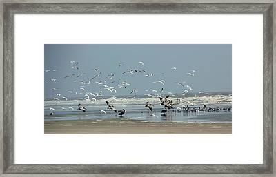 Shorebirds On The Beach Framed Print by Rosanne Jordan
