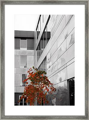 Shoreline City Hall Framed Print by Mary Jo Allen