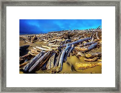 Shoreline Driftwood Framed Print by Garry Gay