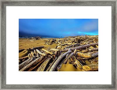 Shoreline Full Of Driftwood Framed Print by Garry Gay