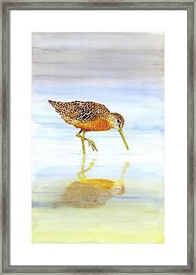 Short-billed Dowitcher Framed Print