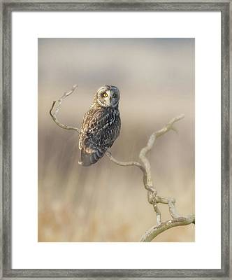 Framed Print featuring the photograph Short-eared Owl by Angie Vogel