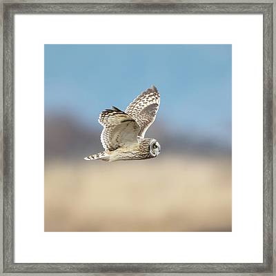 Framed Print featuring the photograph Short-eared Owl In Flight by Angie Vogel