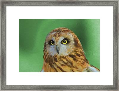 Short Eared Owl On Green Framed Print by Dan Sproul