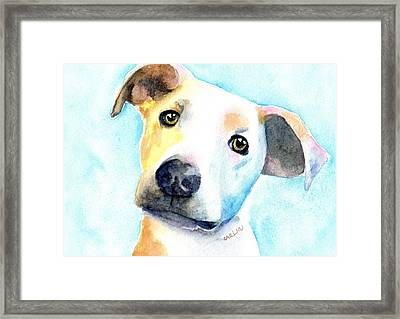 Short Hair White And Brown Dog Framed Print