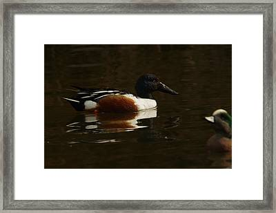 Framed Print featuring the photograph Shovel Tail And A Wigeon by Jeff Swan