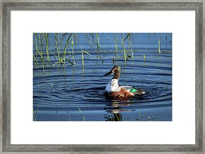 Framed Print featuring the photograph Shoveler by Jean Noren