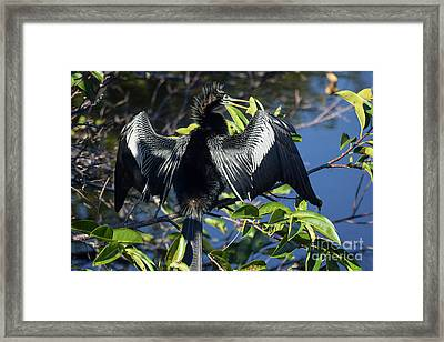Show Drying Framed Print