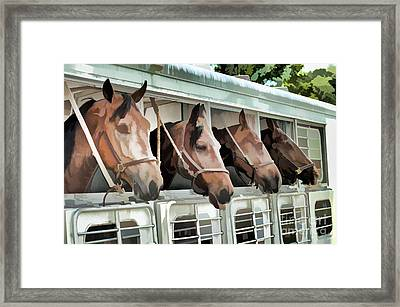 Show Horses On The Move  Framed Print by Wilma Birdwell