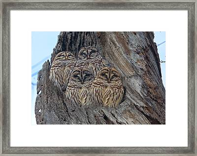 Show Me Your Hooters Framed Print by Betsy Knapp