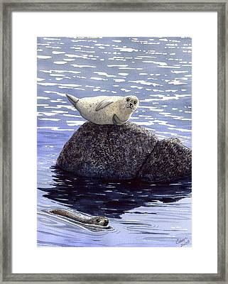 Show Off Framed Print by Catherine G McElroy