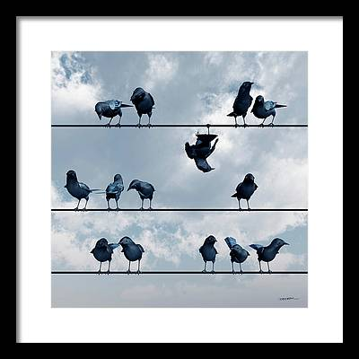 Blackbird Framed Prints