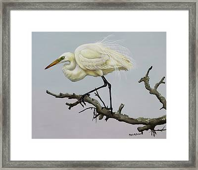Show Off Framed Print by Phyllis Beiser