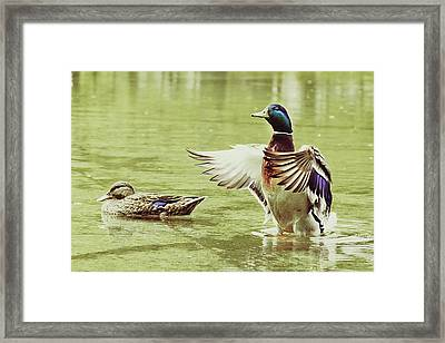 Show Your Colors Framed Print by Andrew Kubica