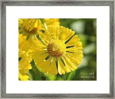 Showered With Love Framed Print by Anita Oakley