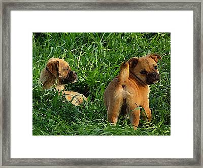Showing Her Mutt. Framed Print