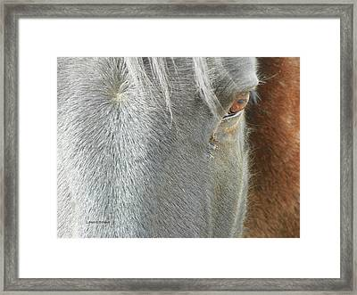 Showing His Age Framed Print