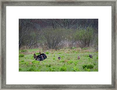Framed Print featuring the photograph Showing Off by Bill Wakeley