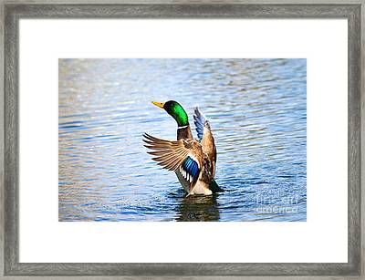 Showing Off Framed Print