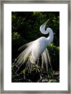 Showing Off Framed Print by Don Durfee