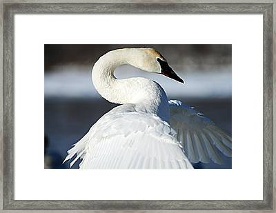 Showing Off Framed Print by Larry Ricker