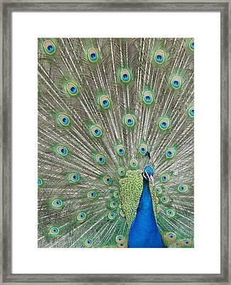 Framed Print featuring the photograph Showing Off by Margaret Bobb