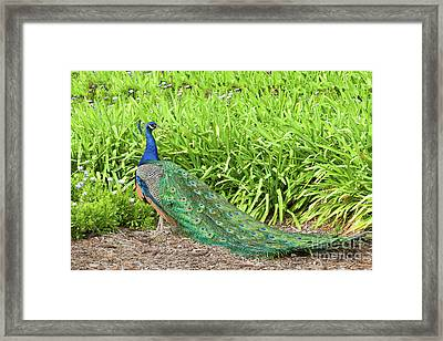 Framed Print featuring the photograph Showing Off by Ram Vasudev