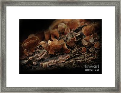 Framed Print featuring the photograph Shrooms by Kim Henderson