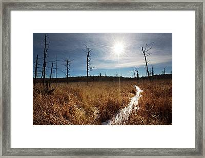 Framed Print featuring the photograph Shrub Swamp by Sue Collura