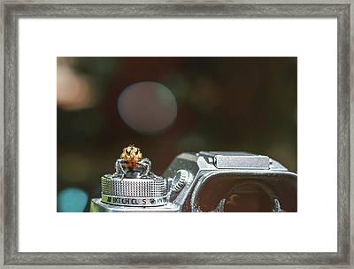 Shutterbug- Framed Print