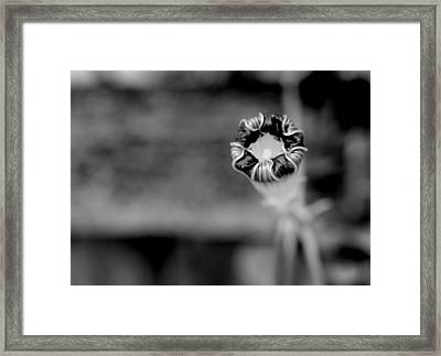 Framed Print featuring the photograph Shy by Corinne Rhode