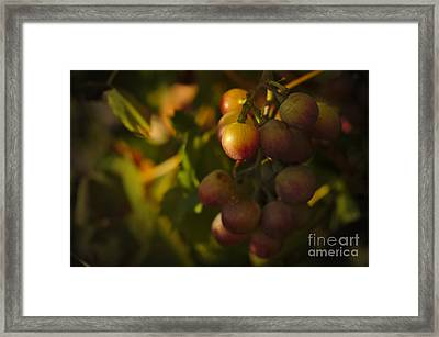 Shy Grapes Framed Print