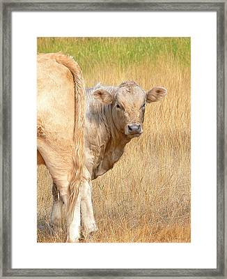 Shy White Calf Framed Print by Jennie Marie Schell