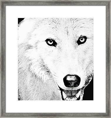 Shy Wolf Framed Print by Debra     Vatalaro