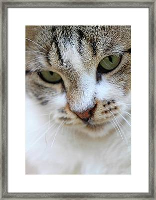 Framed Print featuring the photograph Shyness by Munir Alawi