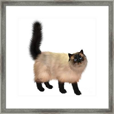 Siamese Cat Framed Print by Corey Ford