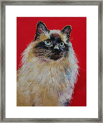 Siamese Cat Portrait Framed Print by Michael Creese