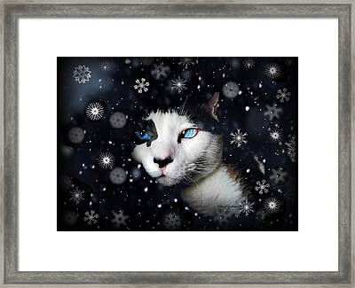 Siamese Cat Snowflakes Image   Framed Print