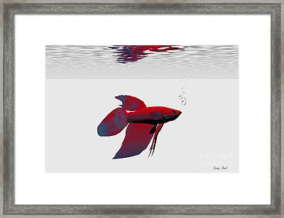 Siamese Fighting Fish Framed Print by Corey Ford